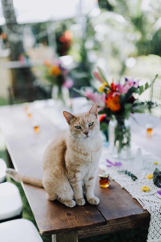haiku maui wedding