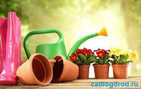 Удобрения-для-цветов-Виды-и-особенности-удобрений-для-цветов-1