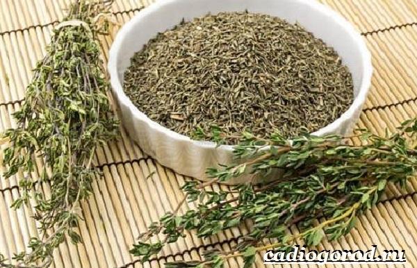 Чабрец-трава-Выращивание-чабреца-Уход-за-чабрецом-29