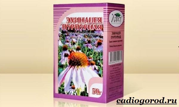 Эхинацея-трава-Выращивание-эхинацеи-Виды-и-польза-эхинацеи-2