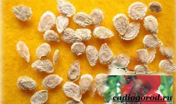Выращивание-рассады-томатов-в-домашних-условиях-5