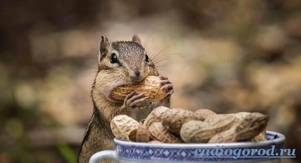 Как-вырастить-арахис-Посадка-арахиса-Уход-за-арахисом-2