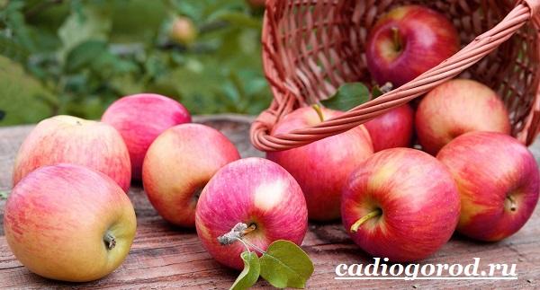 Как-вырастить-яблоню-14