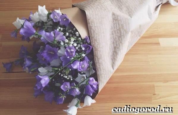 Колокольчики-цветы-Описание-виды-и-выращивание-колокольчиков-37