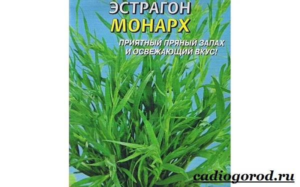 Тархун-трава-Описание-свойства-виды-и-уход-за-тархуном-2