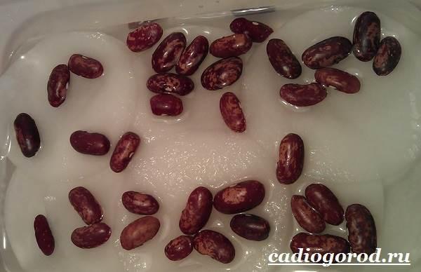 Выращивание-фасоли-Как-и-когда-сажать-фасоль-Уход-за-фасолью-21