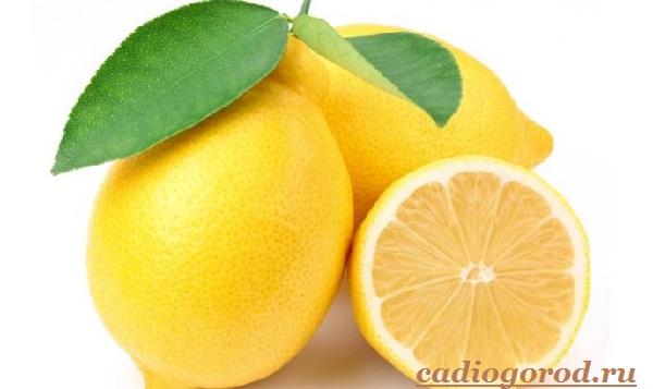 Выращивание-лимона-Как-вырастить-лимон-в-домашних-условиях-Уход-за-лимоном-15