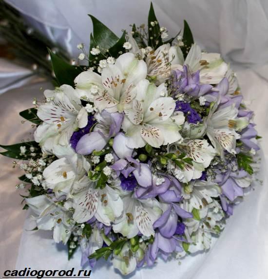 Альстромерия-цветок-Описание-особенности-виды-и-уход-за-альстромерией-7