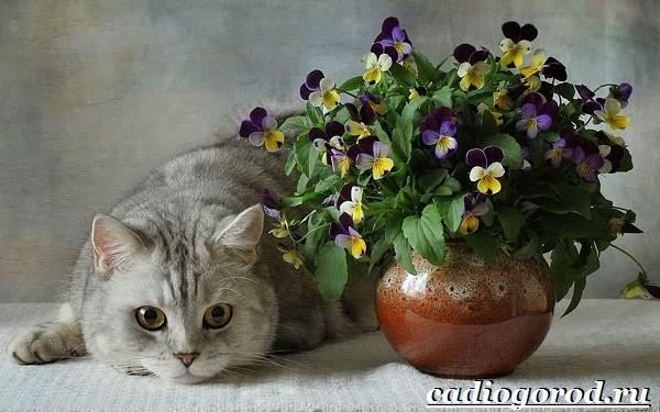 Анютины-глазки-цветы-Описание-особенности-виды-и-уход-за-анютиными-глазками-4