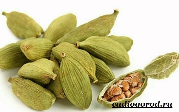 Кардамон-растение-Описание-свойства-выращивание-и-применение-кардамона-3