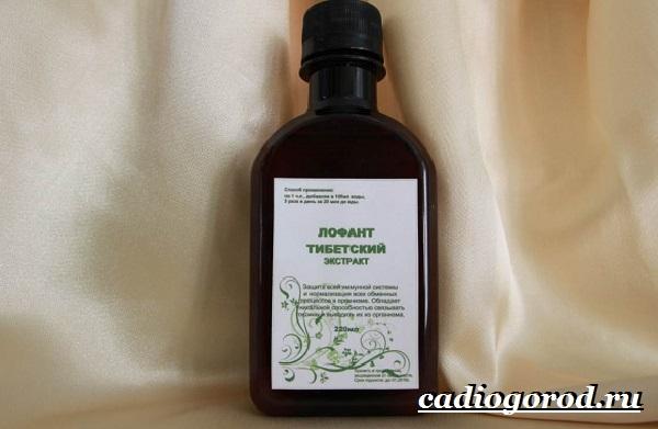 Лофант-трава-Описание-свойства-виды-и-уход-за-лофантом-17