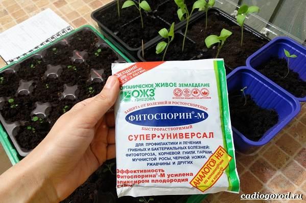 Фитоспорин-препарат-для-растений-Описание-особенности-и-применение-фитоспорина-14