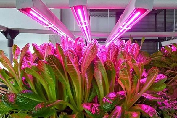 Фитолампа-для-растений-Как-выбрать-для-чего-нужна-и-сколько-стоит-фитолампа-7