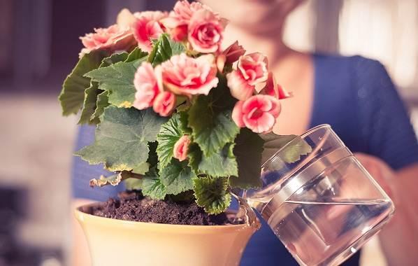 Полив-комнатных-растений-Факторы-виды-и-способы-полива-комнатных-растений-10