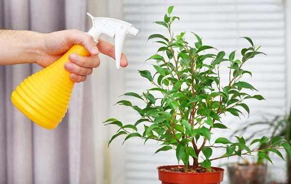 Полив-комнатных-растений-Факторы-виды-и-способы-полива-комнатных-растений-2