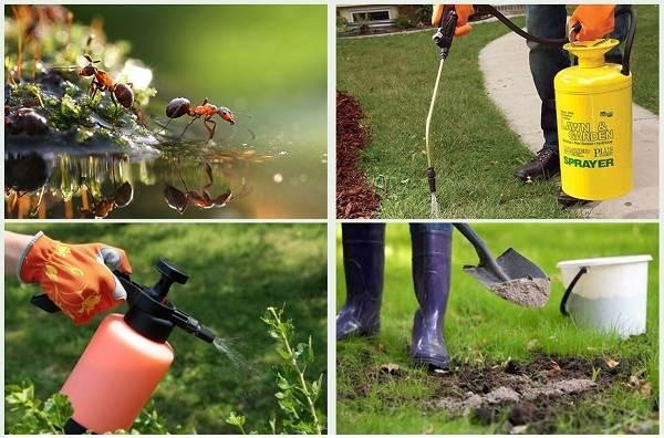 Муравьи-в-огороде-Польза-вред-и-как-бороться-с-муравьями-в-огороде-13
