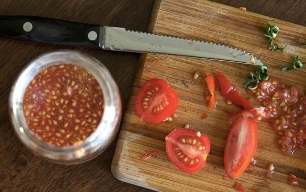 Почему-в-теплице-не-опыляются-помидоры-Как-и-чем-опылять-помидоры-в-теплице-8