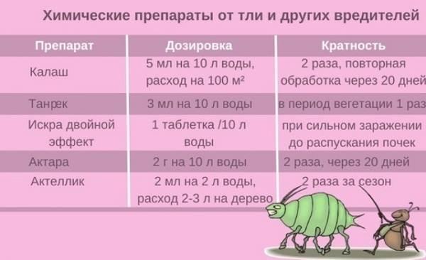Тля-на-розах-Причины-появления-и-способы-борьбы-с-тлёй-на-розах-13