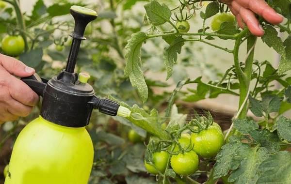 Гусеница-совки-вредитель-в-огороде-Как-выглядит-какой-вред-наносит-и-как-с-ней-бороться-5