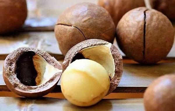 Макадамия-орех-из-Австралии-Свойства-польза-и-вред-происхождение-и-цена-макадамии-4