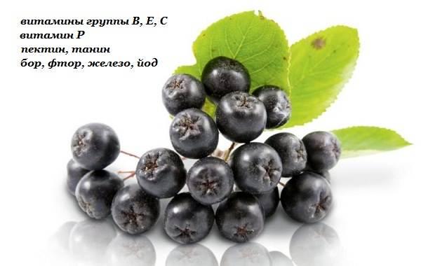 Арония-черноплодная-ягода-Описание-особенности-сорта-и-выращивание-аронии-9