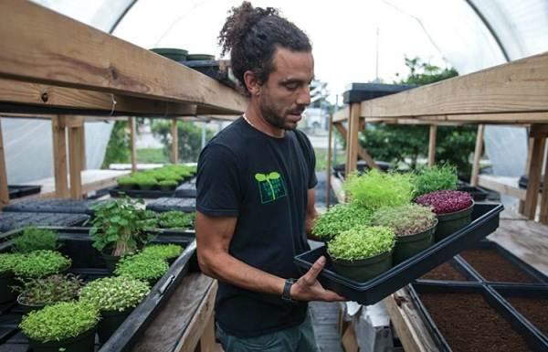Что-такое-микрозелень-Описание-особенности-выращивание-и-полезные-свойства-17