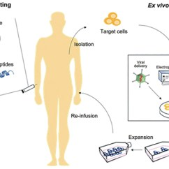 In Vivo Gene Therapy Diagram Satellite Tv Wiring Diagrams An Overview Of Approved And Pipeline Technologies Figure From Shim Et Al 201710 Source Reproduced G Kim D Park Gt Jin H Suh Sk Oh Yk Therapeutic Editing Delivery Regulatory