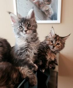 2 kittens wellness exam