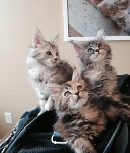 3 lovely kittens