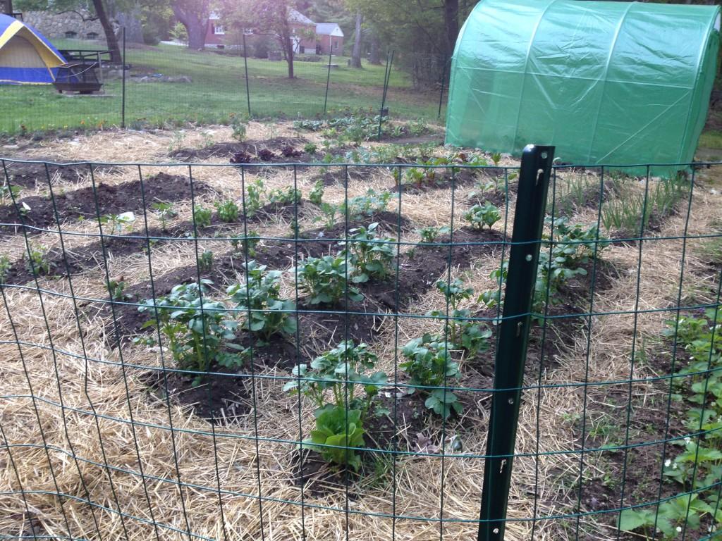 This year's garden follows the farmer's advice.