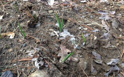 Risk and Resurrection: Stories of Spring
