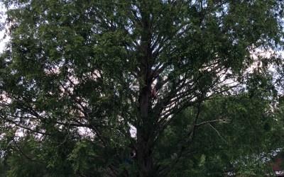 Halfway Up the Tree