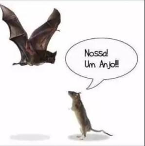 morcego-rato-vies-confirmacao