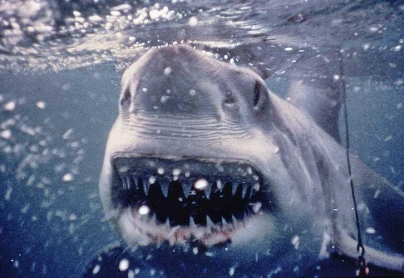 PlayingWithSharks 21 - Todo lo que nos trae Disney+ este mes de julio: Viuda Negra, Sharkfest, Monstruos a la Obra y mucho más
