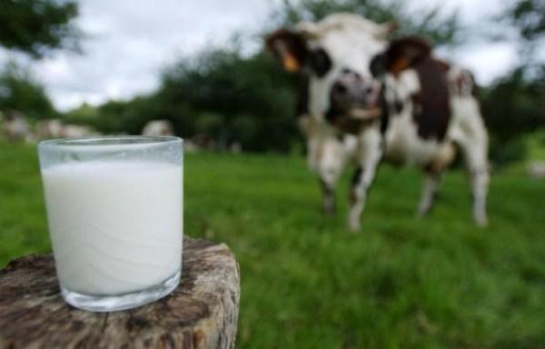 verre-lait-photographie-fond-vache-normande-calvados