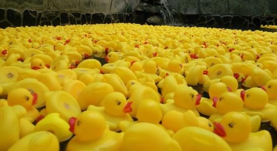 canards de bain Japon