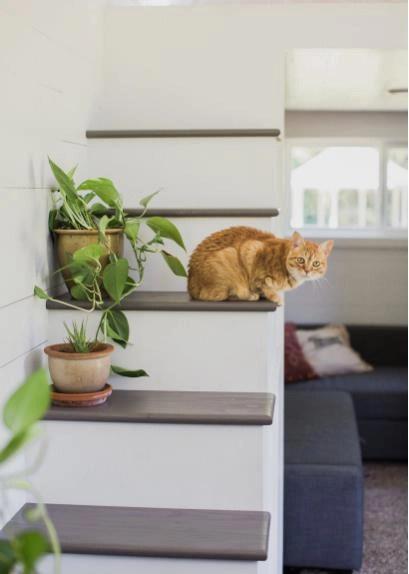 Làm bạn với hai vợ chồng son còn có chú mèo vàng vô cùng đáng yêu.