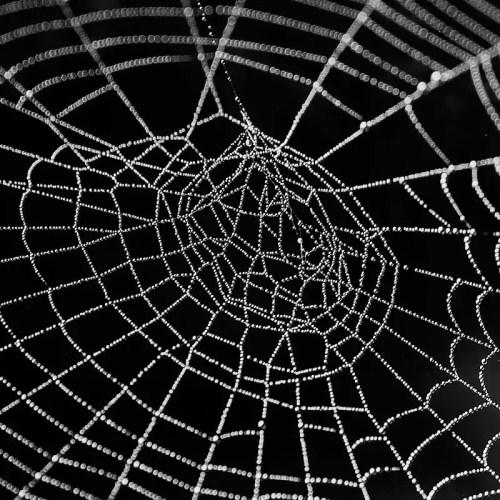 spider web link building