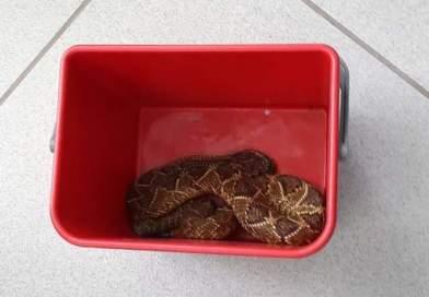 Criança de 1 ano é picada por uma cobra na garagem de casa em Elói Mendes (MG)