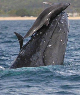 whale and dolphin