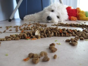 Dog played with his food.