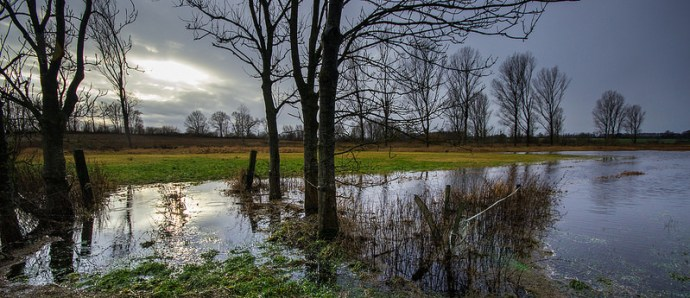 Trees on flooded meadows by  Massmo Relsig