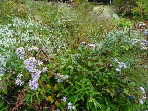 「秋の野の花」の画像検索結果
