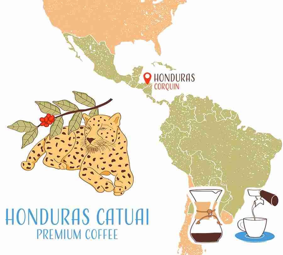 Honduras catuai