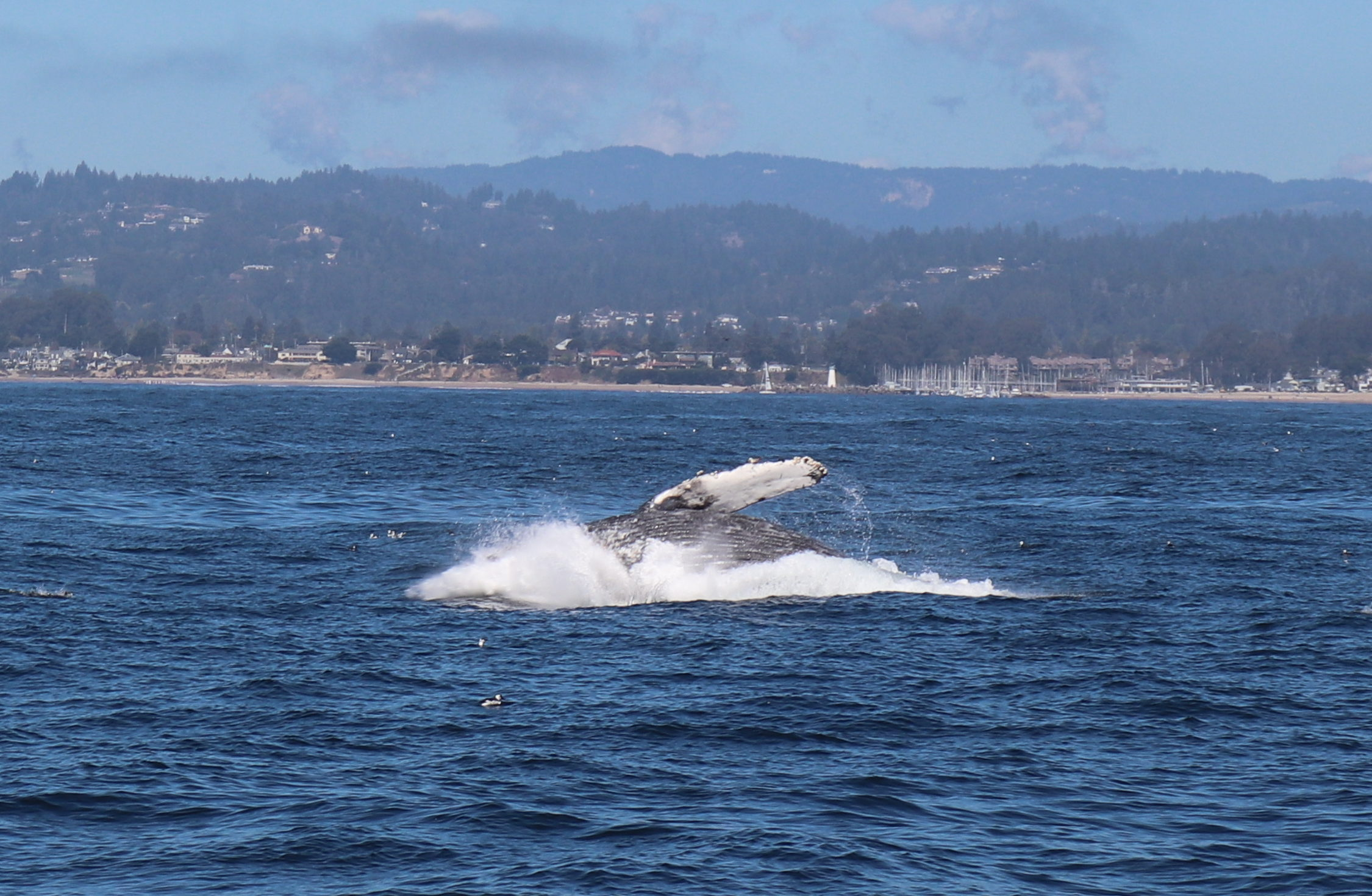 Whale Watching and Wine Tasting on California's Central Coast