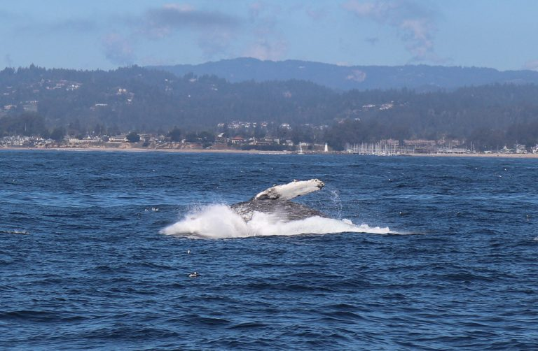 Read more about the article Whale Watching and Wine Tasting on California's Central Coast