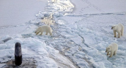 Climate Change Advocates Claim that it is starting to impact Polar Bear populations. Photo credit: Chief Yeoman Alphonso Braggs, US Navy (Public Domain)