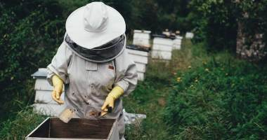 Beekeeper looks into hive