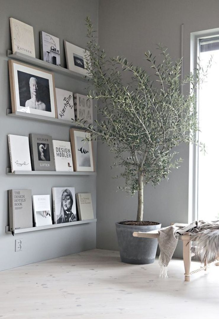 Beautiful olive tree and elegant frames on wall