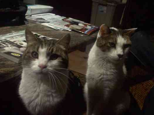 Tiggy on left, Frisco on right. Courtesy of Dr. Jessie Sanders.